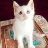 保護した猫が産んだ子猫