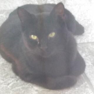黒猫 仮名クロ