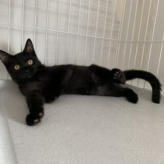 生後3ヶ月の黒猫ちゃん❤️
