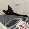 生後3ヶ月の黒猫ちゃん❤️ サムネイル2