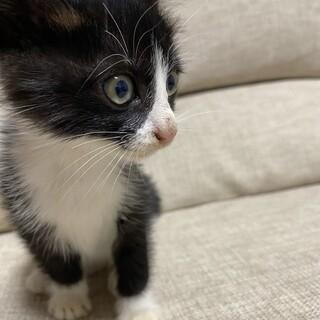 生後1ヶ月位の子猫を保護しました