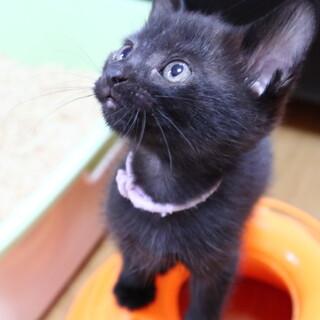 おひざが大好き黒猫女子 おはぎちゃん