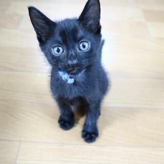 クールな黒猫男子 まつたけくん