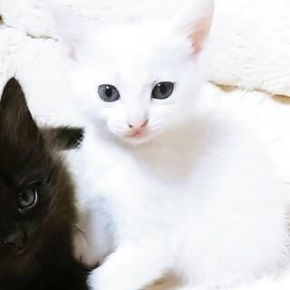 くりくりお目々の白猫ちゃん