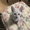 丸目が可愛い姉妹猫です。
