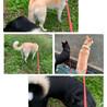 犬友出来た!
