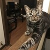 猫の保護施設、里親様募集します。