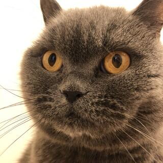 猫らしいマダム猫
