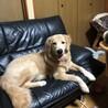 少し早いけど、6ヶ月検診⁽⁽◝( ˙ ꒳ ˙ )◜⁾⁾ 体重29.2kg (|||O⌓O;)  成犬並の体重を越えちゃった∑(Ò⌓ Ólll)マジか…。