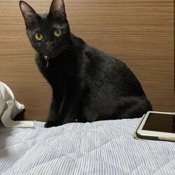 てっちゃん、猫の自主性に全て委ねる