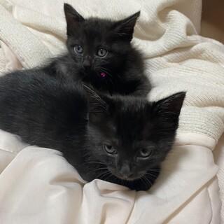 【静岡県磐田市】②黒猫ちゃん再募集