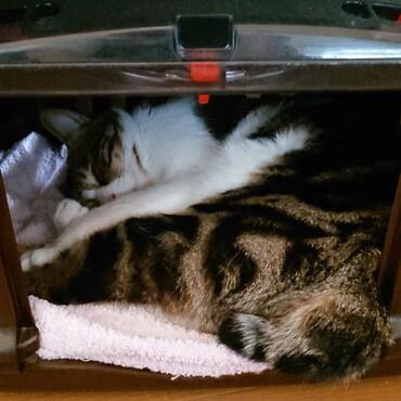 妹に次々と自分の寝床を侵略されて、仕方なく狭い所で寝る優しい兄さん。