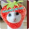 ★TNR地域猫の会★ strawberry_cats
