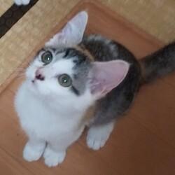 三重県桑名市10月11日(日)第108回リトルパウエイド猫の譲渡会