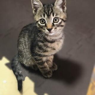 生後2ヶ月✩ 元気な仔猫!