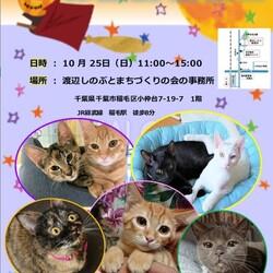 稲ねこ 保護猫譲渡会 開催です!