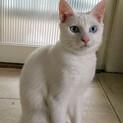 青い目の美しい男の子