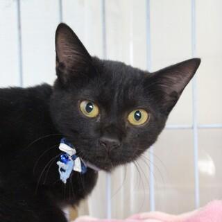 ゴロゴロ甘えん坊の黒猫