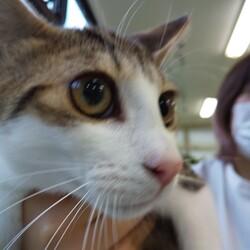ちび猫ワクチンに行く