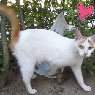 生後6か月位のメス子猫と母猫(姉妹?)避妊手術済