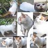 生後6か月位のメス子猫と母猫(姉妹?)避妊手術済 サムネイル3