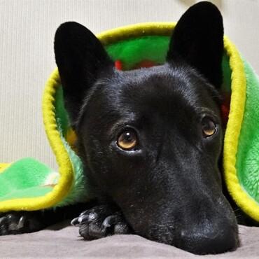 毛布はちょっと気が早いかと思ったが、すんなり受け入れるぽんず嬢。寒がりめ。