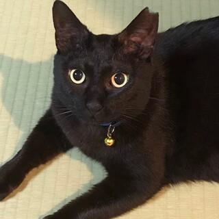美人黒猫「珠美」ちゃん♡