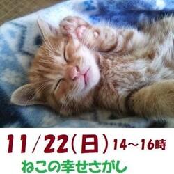 子猫が沢山参加大阪市北区*譲渡会
