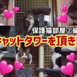 またまた】保護猫達にプレゼント