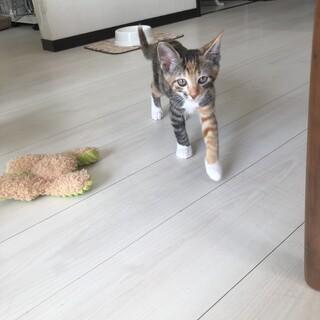 三毛猫の赤ちゃん