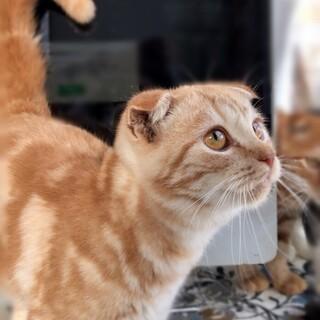 【10/18家族決定】第2の猫人生★大阪府・ジン君