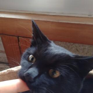【4兄妹】のんびりな黒猫の女の子