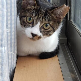 先住猫ちゃんのお友達に☆ガンちゃん5ヶ月