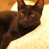 F27 黒猫の女の子(仮名:ツナ)