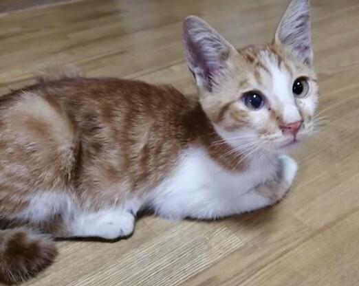 「物おじしない、のび太君。」愛知県 - 猫の里親募集(336273)