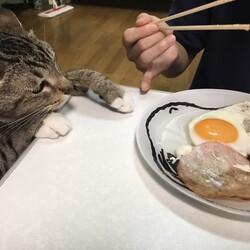 食べ物に強い関心を持っています