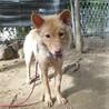 とても可愛い、元野犬の女の子 キコちゃん サムネイル2
