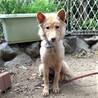 とても可愛い、元野犬の女の子 キコちゃん サムネイル7