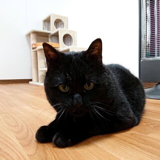 16歳 黒猫 家光さん 里親様募集です♡
