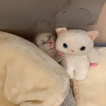 ぬいぐるみに抱きついて爆睡。