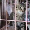 保護猫です。キジトラの6ヶ月の男の子。