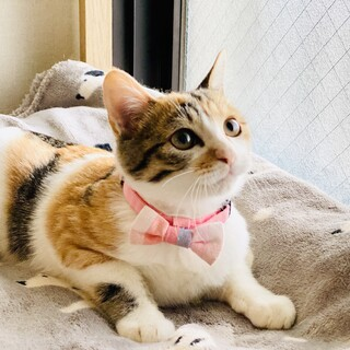 きゅんとくる子猫さん!【4ヶ月】