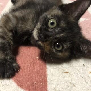 サビ子猫エナちゃん