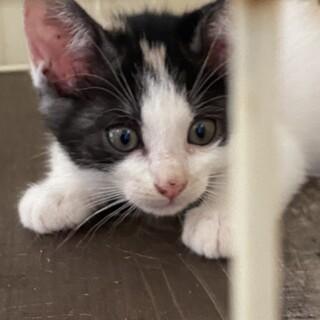 元気な子猫、ハチワレ君と珍しい毛色のクリーム君。
