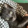 ♪元気な黒猫、生後1ヶ月くらいの男の子♪