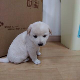 募集中断 捨てられたモフモフの子犬3