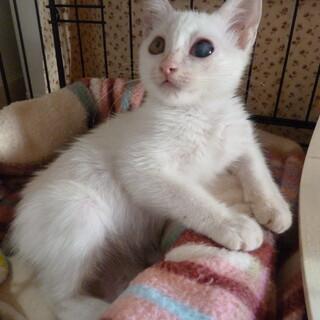 超の付く甘えん坊の子猫ゴロスリです♡