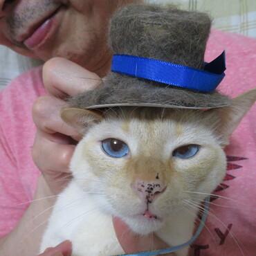 ぼく、コタロウ。みゅう王子、一緒に作った帽子だよ。