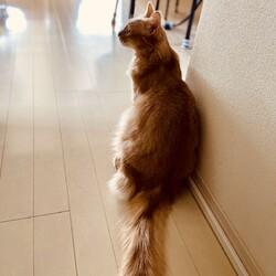 ❤︎スピカちゃんの猫生❤︎
