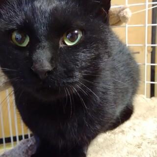 【4兄妹】子育てをがんばった人好き黒猫のお母さん